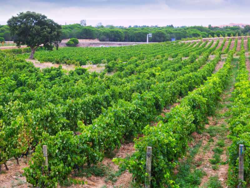 refrigeracion industrial produccion vino